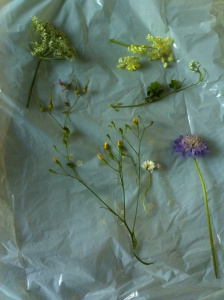 Wildflowers from the forest