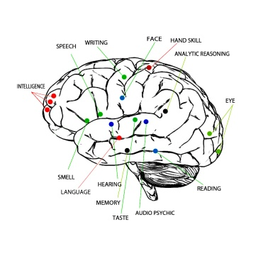 Areas Of The Brain Associated With Cognitive Functioning